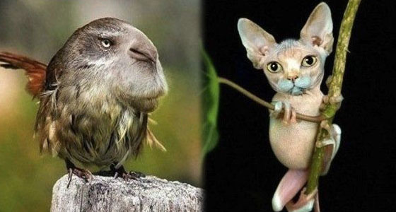 Discover a very funny human/animal face swap compilation ... |Mouse Animal Face Swap