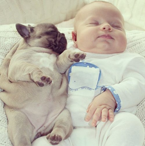 baby-sleeps-with-bulldog-puppies-2