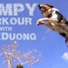 Jumpy – The Parkour Dog