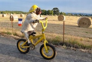 its-a-dog-on-a-bicycle-internet-when-will-you-ever-stop