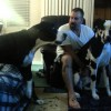 Spoiled Great Dane Argues With His Owner