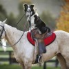 there-are-no-rules-against-a-dog-being-a-jockey
