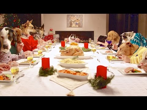 Holiday Feast – 13 Dogs and 1 Cat
