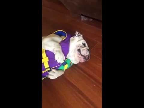 Bulldog Hates Life Vest