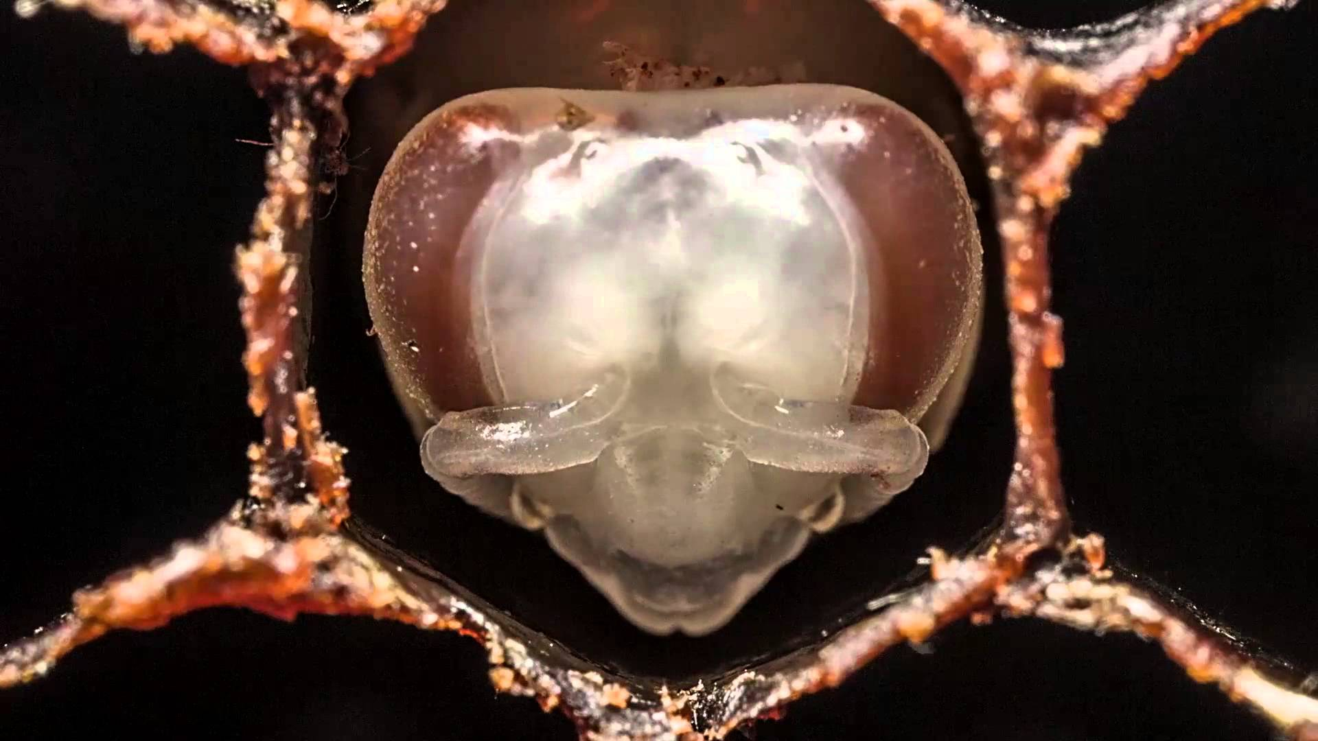 How bees are born