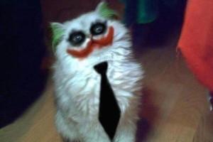 TheTango-CatCosplay-07312015-01