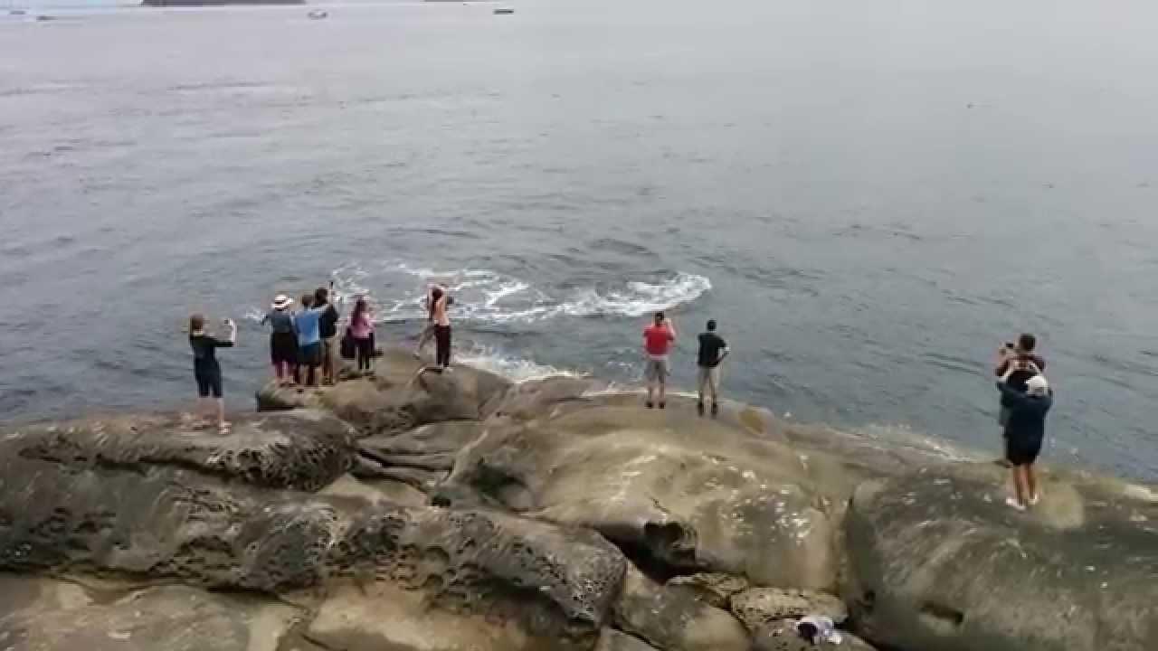 Orca Surprise