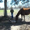 Newborn Horse Sneezes and Falls Ove