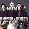 Linkin Park – Numb (Animal Cover)