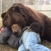 As Gentle As a Rescue Bear Can Get
