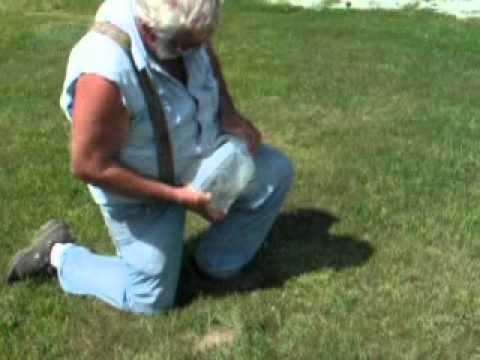 How to catch a gopher with water jug