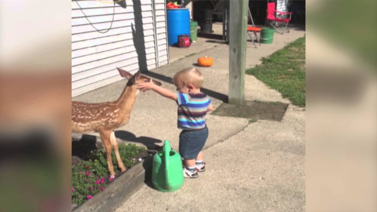 Little Boy Befriends a Baby Deer