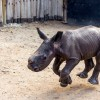 Baby Rhino knows its name