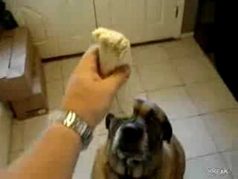 Dog eats burrito in 1 second
