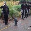 A penguin got promoted to Brigadier