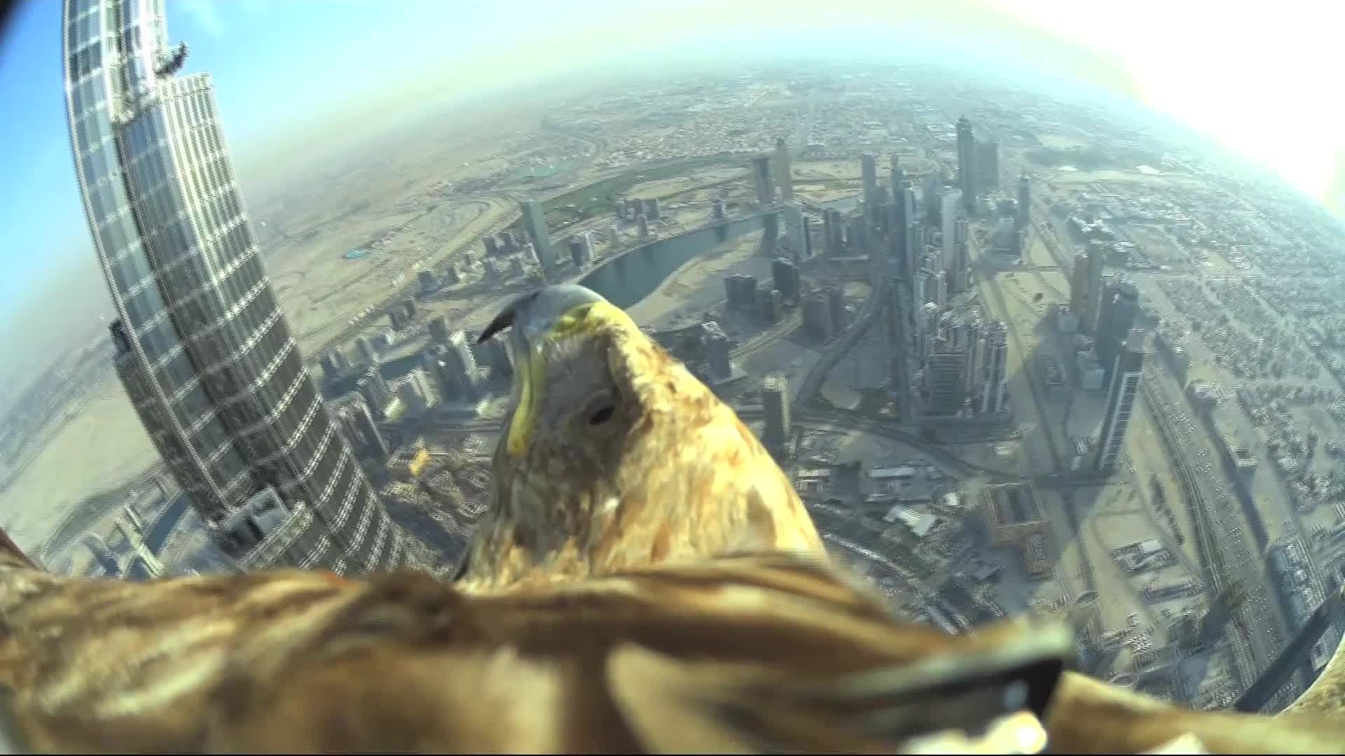 Eagle makes a world record flight