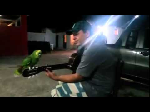 Just a guy playing his guitar and a parrot