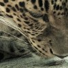 TheTango-TGIF-0922201639_still_tmp