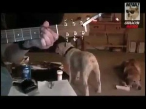 Dog rocking out to Nirvana