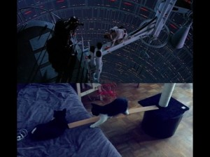 Recreating one of the most iconic Star Wars scenes. With cats.