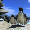 Penguins are clumsy