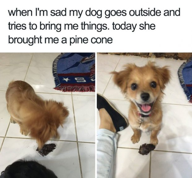 happy dog memes that will make you smile from ear to ear